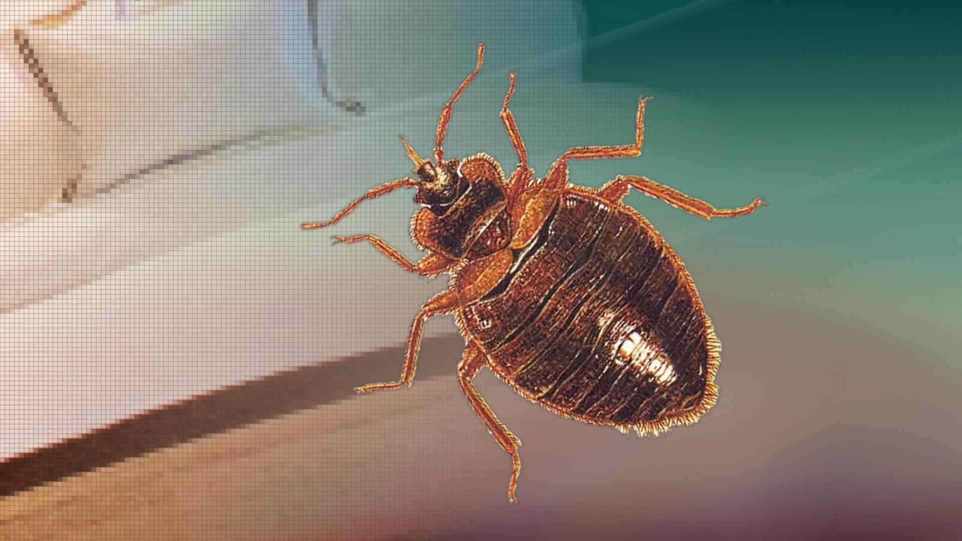 New york oneida county oriskany falls - Bed Bugs Found And Treated At Metlife In Oriskany